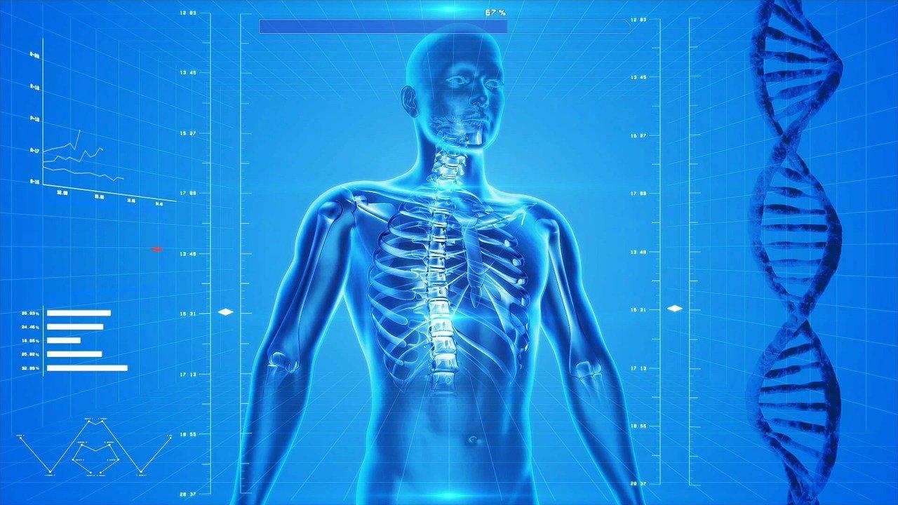 14 Curiosidades sobre el Cuerpo Humano que Desconoces
